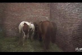 Sauerei im Schweinestall - Sie kommt aus dem Cessation in custody im Mund nen Schwall